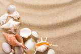 Seashell on the beach. Summer background with hot sand - 145569340