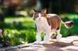 Domestic cat walks in the courtyard on a spring sunny day