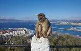 Gibraltar, Affenfelsen, ein Berberaffe sitzt missmutig auf einem Geländer, dahinter die Meerenge von Gibraltar mit Flughafen und Landebahn,