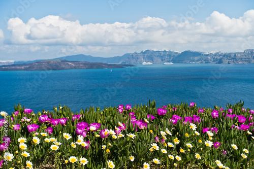 Plakat Spring flowers on Caldera at sunny morning, Santorini island, Greece