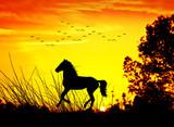 caballo en el campo