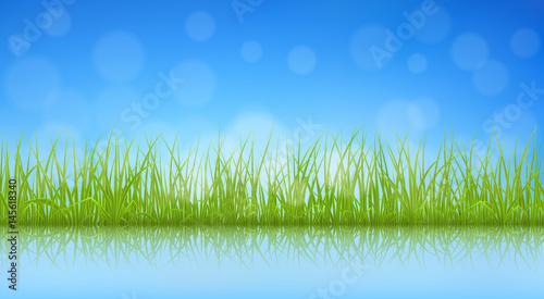 Grünes Gras der hohen Qualität mit Reflexion auf Wasseroberfläche, Vektorillustration.
