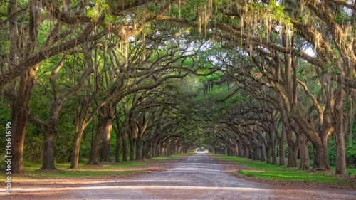 Dirt road into Wormsole Plantation lined with Live oaks draped in Spanish Moss © BJ Ray