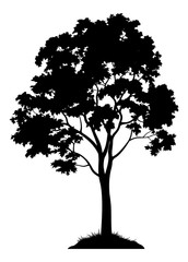 Maple Tree with Leaves and Grass Black Silhouette Isolated on White Background. Vector