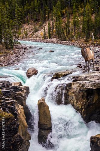 Great Sanvapta Falls in Canada - 145678398