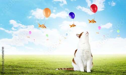 Cat and gold fish