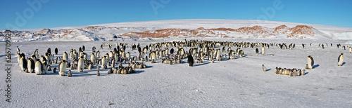 Fotobehang Antarctica Colony, flock - Emperor Penguins in Antarctica. Overall plan