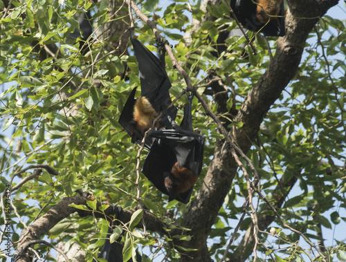 bats on tree Poster