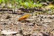 A monarch butterfly takes a well deserved break on the shores of Lake Superior