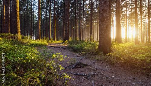 Staande foto Chocoladebruin Waldpfad mit Sonne