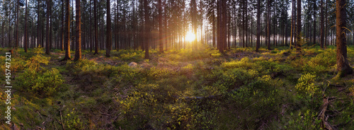 Green forest scenery panorama with the sunlight - 145747321
