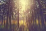 Märchenhafter Wald mit Sonnenlicht, Abstrakt