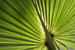 A bright green palm glows with the sun behind it showing off the intricate lines.