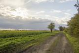 Der Weg am Rapsfeld