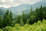 beautiful forest landscape in the Carpathian mountains