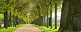 Park mit Lindenallee im Frühling, erstes frisches grünes Laub