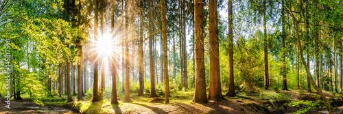 Fridge magnet Wald im Frühling, Panorama einer idyllischen Landschaft mit Bäumen und Sonne