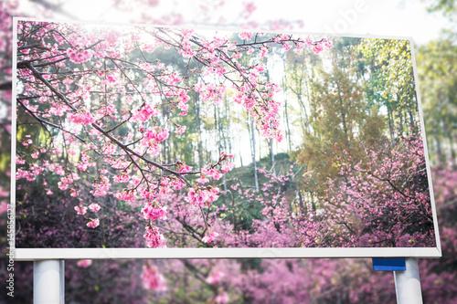 Poster beautiful sakura trees display on billboard