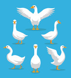 White Goose Poses Cartoon Vector Illustration - 145864762
