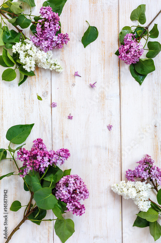 Blooming white and purple lilacs.
