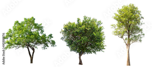 tree isolated,tree on white background,collections tree isolation. - 145880576