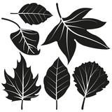 Vector black and white illustration set of leaves.