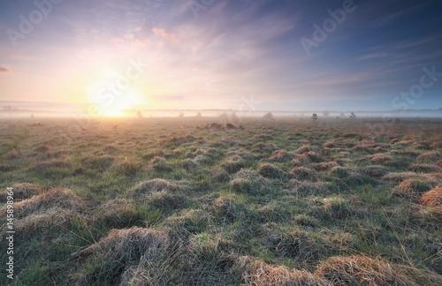 Poster sunrise over marsh in spring