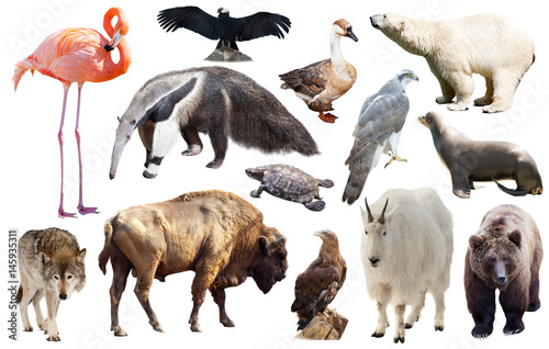 Set of fauna of North American animals. Poster