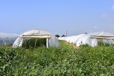 greenhouses in Cyprus