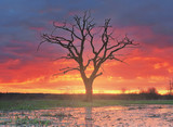 Landscape of a lonely old tree in a meadow against a background of bright sunrise.