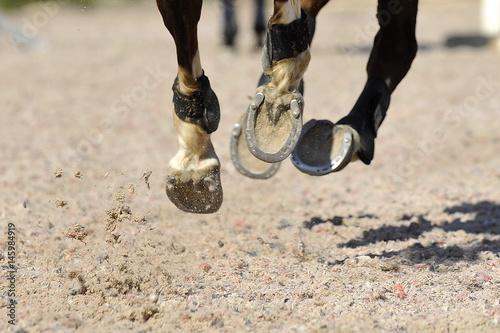 Detailaufnahme Hufe im Sand Poster