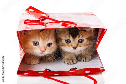 Poster Zwei Kätzchen in Geschenktüte