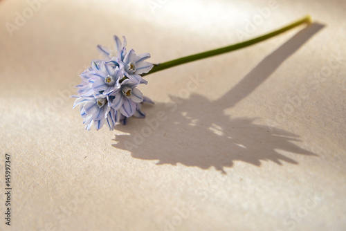 Flower lies on the paper in sunlight Poster