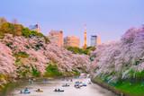 Chidorigafuchi park with full bloom sakura