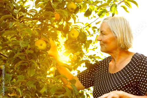 senior woman picking apples sun