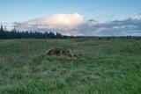 Sunset At Mima Mounds