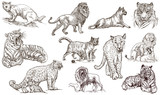 Animals around the World. CATS. An hand drawn full sized pack. Line art. - 146121785