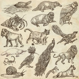 Animals around the World - An hand drawn full sized pack. Hand drawings. Line art. - 146122113