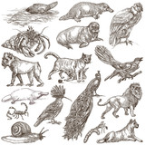 Animals around the World - An hand drawn full sized pack. Hand drawings. Line art. - 146122381