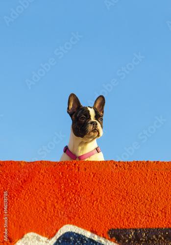 Eva Ozkoidi_nice dog on the beach,france