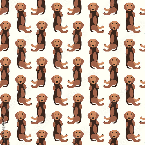 Seamless pattern - dachshund dog - 146156513