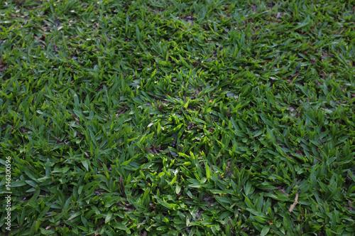 Feld des grünen Grases, schöner Naturhintergrund des Konzeptes
