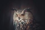 eagle owl - 146208534