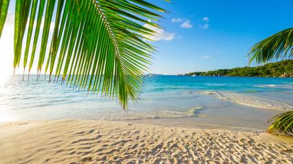 Palmen am tropischen Strand: Anse Lazio, Praslin, Seychellen