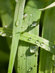 water droplets on the leaves in the forest macro