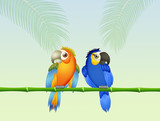 love birds parrots