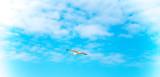 Möwe fliegt am blauen Himmel über den Strand