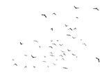 Black vector flying birds flock silhouettes isolated on white background