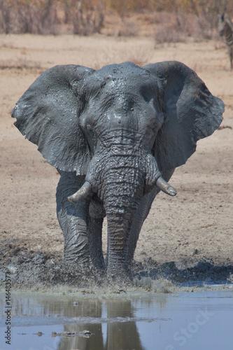 Poster Elephant, Etosha National Park, Namibia