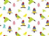 Bird Gouldian Finch Wallpaper